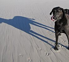 Dog with shadow dog waiting for the ball! by Lee Jones