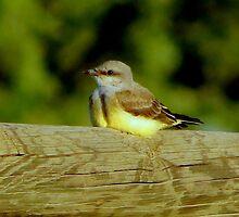 The Little Finch by Diane Arndt