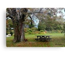 Picnic Table under an Ancient Tree Metal Print