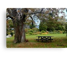Picnic Table under an Ancient Tree Canvas Print