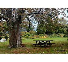 Picnic Table under an Ancient Tree Photographic Print
