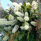 King Orchids (Dendrobium Tarberi) by Margaret  Hyde