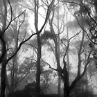 The Clearest Way into The Universe is Through a Forest Wilderness by Kitsmumma