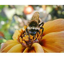 Bee My Honey Photographic Print