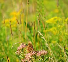 Butterfly on Milkweed at the Chaparral Prairie by TrendleEllwood