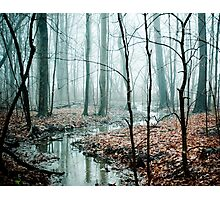 Winding Creek Photographic Print