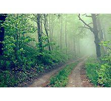 Woodland Fog Photographic Print