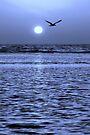Blue Hour by Jo Nijenhuis