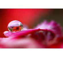 Daisy dew drop Photographic Print
