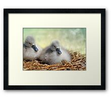 Sleepy fluffs Framed Print