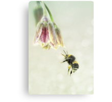 The pollen collector Metal Print