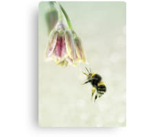 The pollen collector Canvas Print