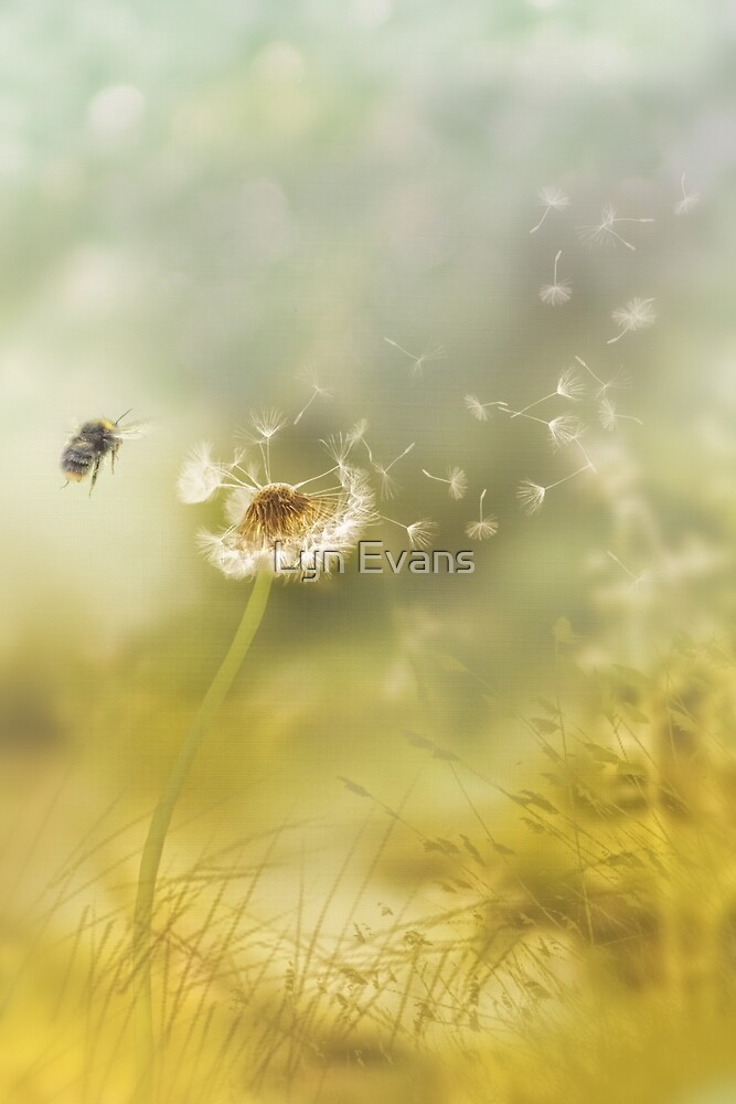 Summer breeze by Lyn Evans