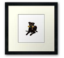 Throw the Dog a Bone! Framed Print