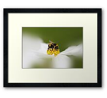 Summer loving Framed Print