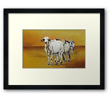 In the dry paddock Framed Print