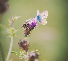Delicate Beauty by Greggors