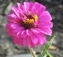 purple flower  by Melissa, Sue Ball
