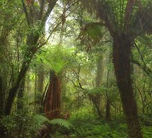 Rain Forrest Fantasy - Mount Wilson, NSW Australia - The HDR Experience by Philip Johnson