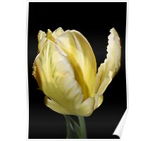 Yellow Parrot Tulip Poster