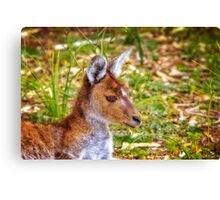 Inner Peace, Yanchep National Park Canvas Print