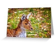 Inner Peace, Yanchep National Park Greeting Card