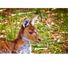 Inner Peace, Yanchep National Park Photographic Print
