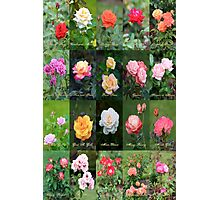 June Roses Garden Collage Photographic Print