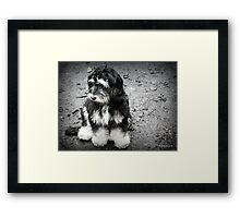 Glum Pup Framed Print