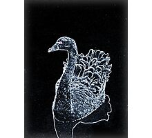 Black Swan Photographic Print