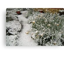 DAFFODILS IN SNOW Canvas Print