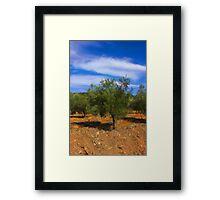 Olive Tree Framed Print