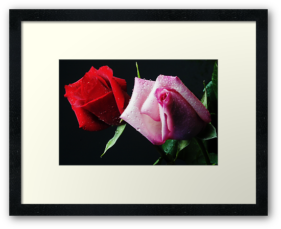 A Study in Red & Pink (Greeting Card or Print) by wolftinz