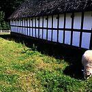 Grassing Sheep  by HeklaHekla