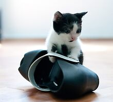 Cat falling in love 10. by PhotoPerocsenyi