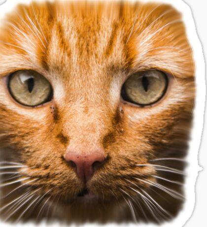 GTA 5 - cat shirt (I'm Not a Hipster) Sticker