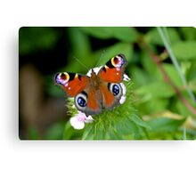 Colourful Butterfly on flower Canvas Print
