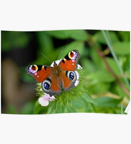 Colourful Butterfly on flower Poster