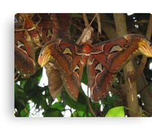 Moth in a Tree Canvas Print