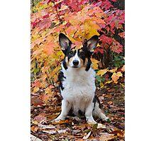 Yogi in Fall Colors Photographic Print