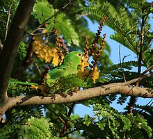 Green Parrot Eating Flowers by rhamm