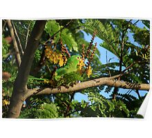 Green Parrot Eating Flowers Poster