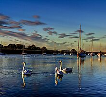 Graceful evening swans by DavidHornchurch