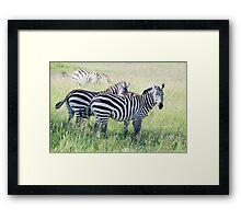 Zebras in Serengeti Framed Print
