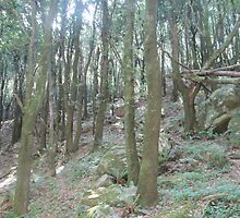 Forest 3 by Furiarossa