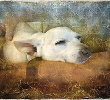 Little Tinker Waiting by Susan Werby