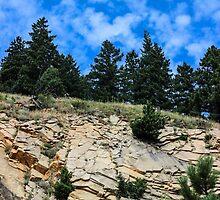 Colorado Contrast by Rachel  Roderick
