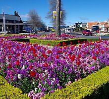 Rotorua Traffic Island by lezvee