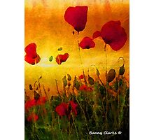 Poppy Sunset Photographic Print