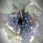 A Beautiful Bunch of Grapes by Sherry Hallemeier